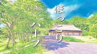 Ghibli-style harp music【Calming down mind】~ For healing time, for sleeping, for meditation and so on
