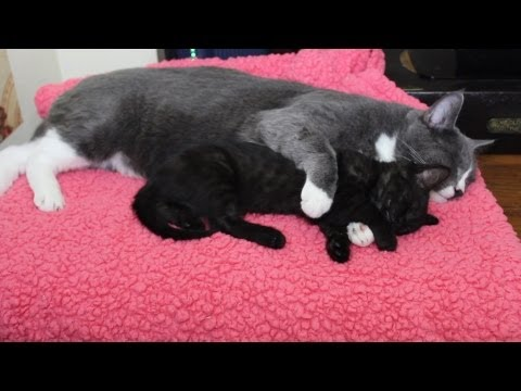 Cat Hugs Kitten While He Sleeps