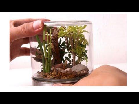 plants in glass jars