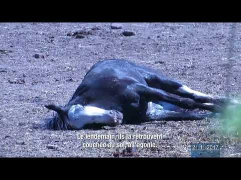 Enquête sur le commerce de viande chevaline en Argentine et Uruguay (2017)