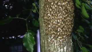 Baited my First Swarm - Swarm Commander Swarm Lure - Swarm Catch 016