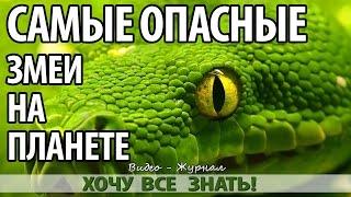 Семь самых опасных ядовитых змей планеты!