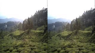 Munnar Tea Estate near Pallivasal Power Station | Tea Pursuit