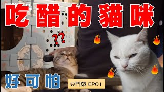 【Soy VS Rong EP01】Can you believe this? Cats get jealous too.