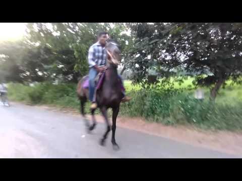 Horse ride at kakinada(3)