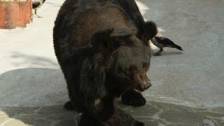 Ранний подъем  весна разбудила зверей в Московском зоопарке