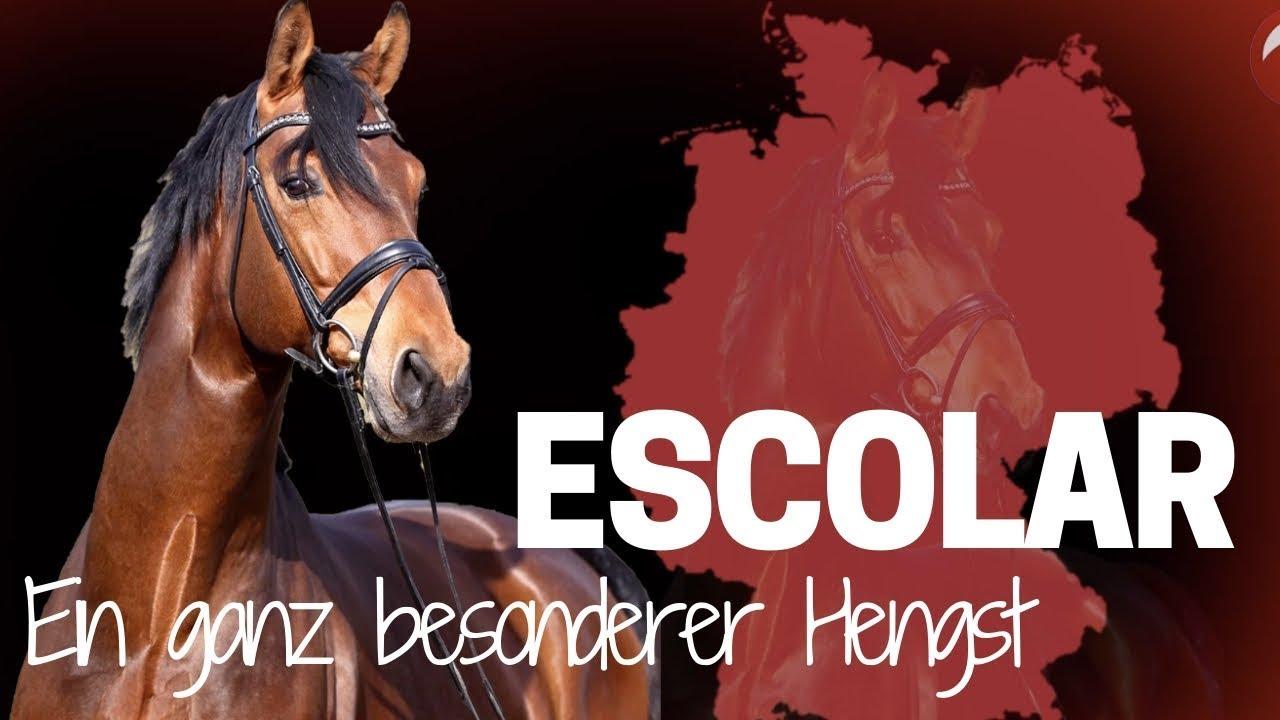 Download Escolar 🏆 | Vom Fohlen zum Grand Prix Pferd |Ein spannender Weg bis zur Spitze!