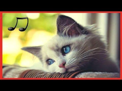Как спит кошка когда болеет