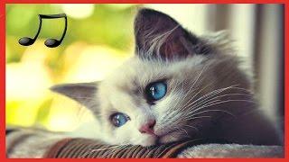 музыка предназначена для кошек - расслабляющая музыку спать беспокойные кошка 2017 #RUмузыка