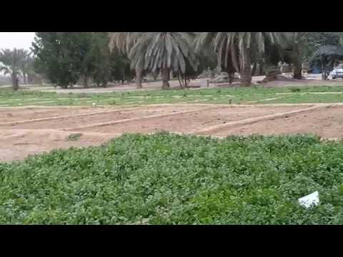 Dubai videos hd Farms and vegetable growing in Dubai