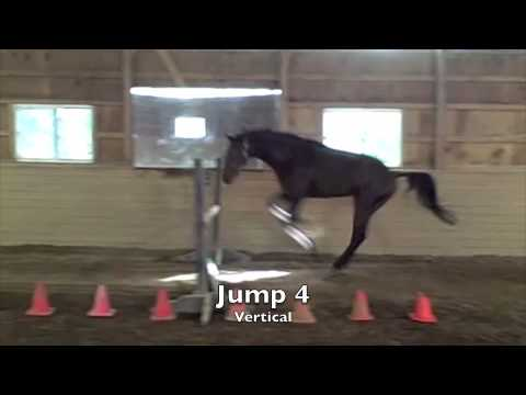 horse science fair projects Hunt seat and jumper manual: learning to jump with your horse (pnw 488)   4-h horse project leader guide download pdf (4-h 130l) horse science rich.