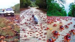 Quá Sốc - Cuộc Xâm Lăng Của Các Loài Động Vật - The Invasion of Animals 😁CTN😁
