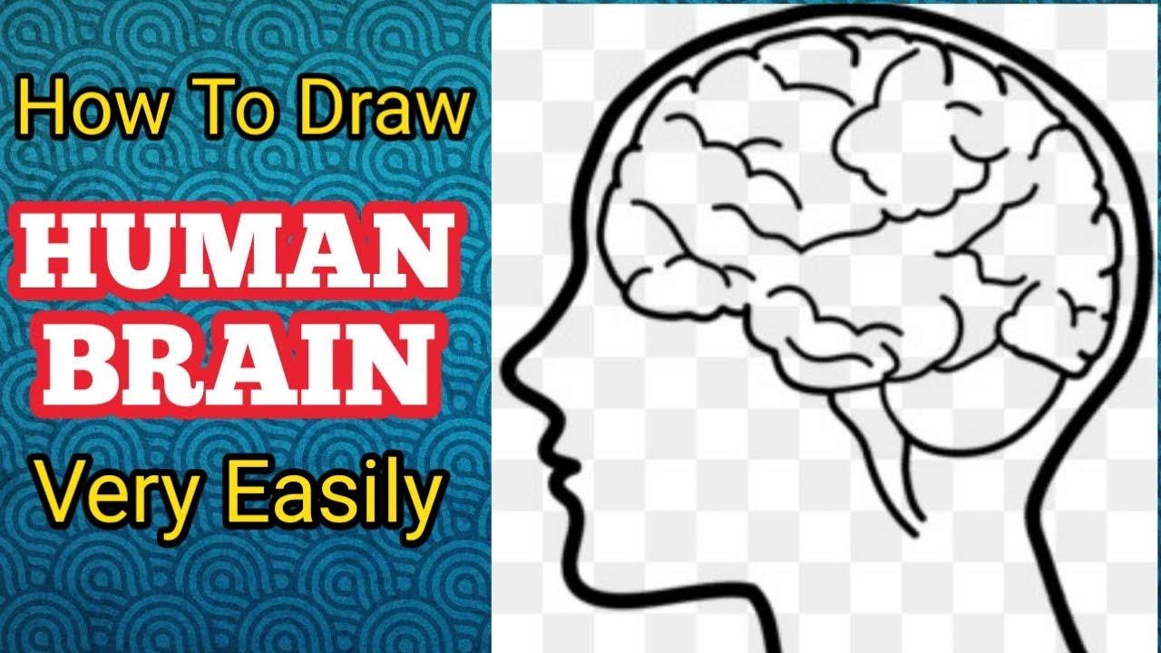Human Brain Diagram    How To Draw Human Brain very easily ...