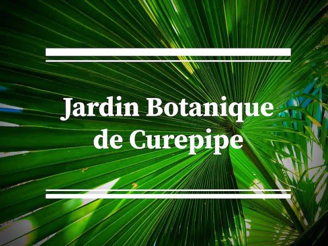 Jardin Botanique de Curepipe : enn bon plas pou kas enn poz.