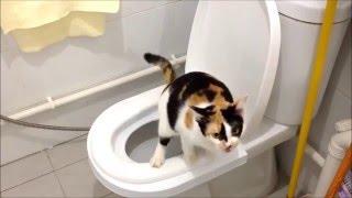 Коты тоже ходят на унитаз