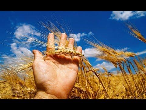 Крым: урожай после