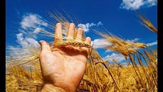 Крым: урожай после засухи
