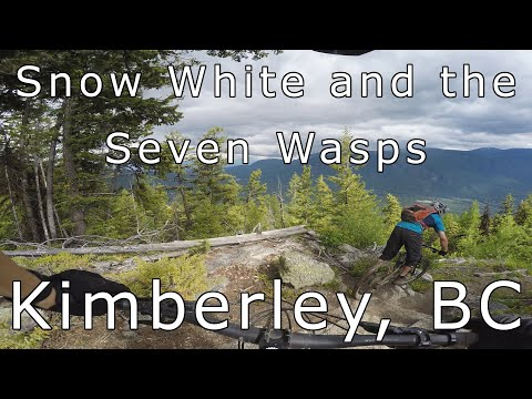 Snow White And The Seven Wasps - Kimberley, BC
