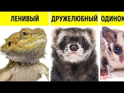 Какое Животное Больше Всего Подходит вам по Характеру?
