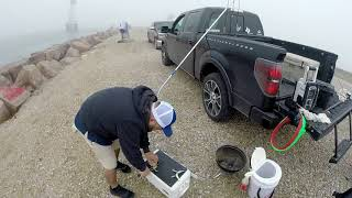 Catching Gorillas at Texas City Dike