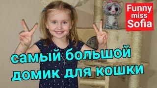 Невская маскарадная видео про кошку, Кошачий уголок Аси, Кошачий домик