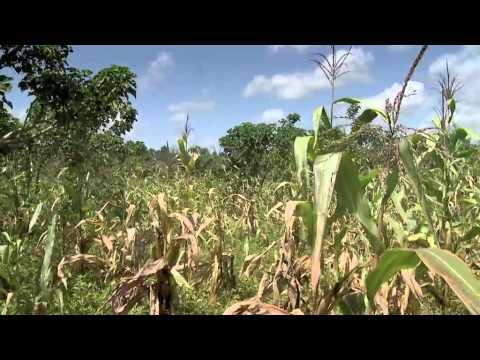 future food | 2 Kenya: food or fuel?