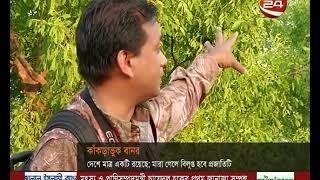 কাঁকড়াভুক বানর দেশে মাত্র একটিই রয়েছে   Bangla News TV Network   Y
