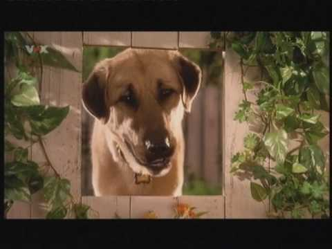 Cats and Dogs Teil 9 - YouTube