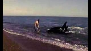 Danza con Orcas