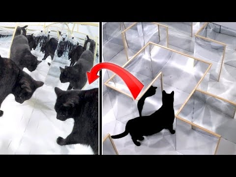 Tricky ILLUSION MIRROR MAZE - Watch CAT'S REACTION and ESCAPE