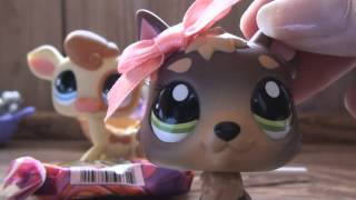 "Littlest Pet Shop: Kandy TV Episode #6 ""Zion National Park Expedition"""