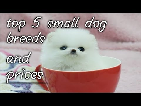 the smallest dog breed and the prices