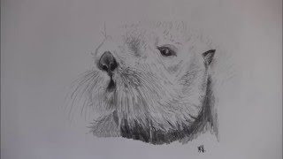 Speed drawing - Sea otter