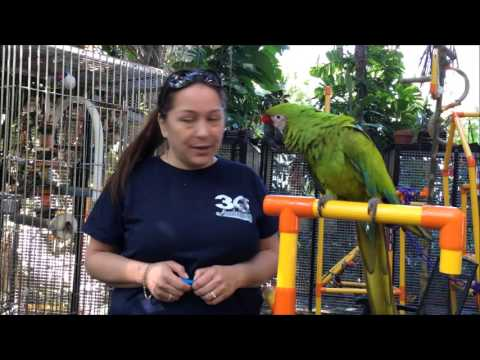 Michele Target Training Buffons Macaw Ratchet