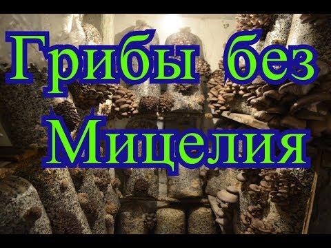 сколько стоит грибы вешенка в нижнем новгороде