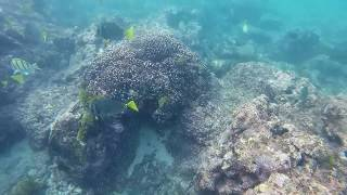 Snorkeling The Welk Resort Sirena Del Mar In Cabo San Lucas 2 5 18