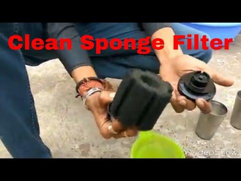 How to Clean Aquarium Sponge Filter in Just 2 Min [hindi]