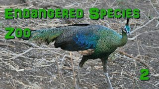 Endangered Species Zoo   Part 2: Green Peafowl - Zoo Tycoon 2