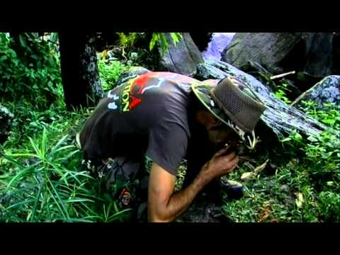 Strain Hunters Malawi Portuguese Subtitles