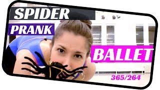 Ballet Duet- Spider prank ballet- dancing everyday 365 ballets- ballet 264