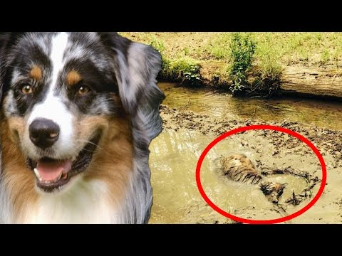 Dog rescue compilation: amazing dog rescue; police save dog; dog in hot car; drowning dog & more