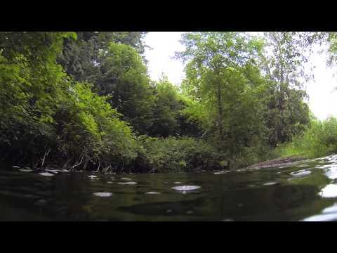 Little Campbell River: Re-meander Restoration