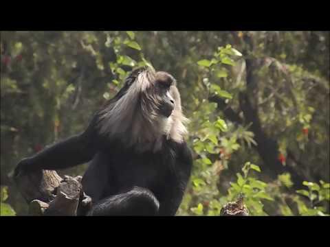 Delhi Zoo Documentary | Short Movie
