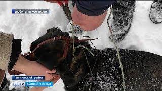 Жители Иглинского района спасли избитую собаку
