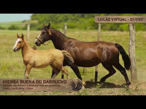 Lote 05 - Hierba Buena do Garrucho
