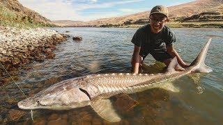 Biggest Sturgeon of the Year! | 2017 Washington State Sturgeon Fishing (Trip 3, Part 1)