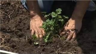 Herb Gardens & Box Gardening : Intensive Vegetable Garden Growing