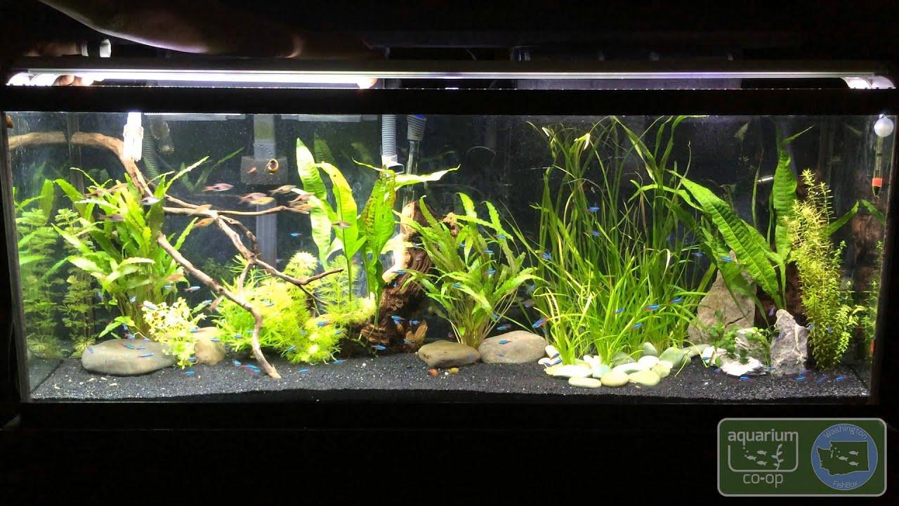 Led Fish Tank Lights Amazon