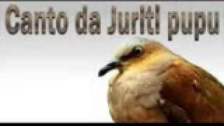 Download Mp3 Canto Da Juruti áudio Bem Limpo