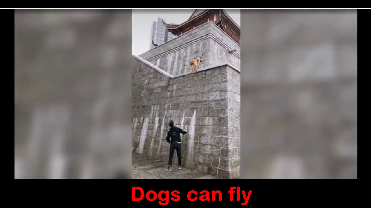 Viral Video Yes Dogs Too Can Fly Watch Now Youtube